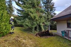 Sicherung des Baumes